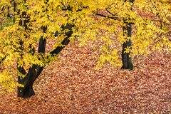 autumn leaves of trees in park stock photos