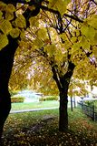 Autumn Leaves on Trees Stock Photos
