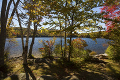 Autumn leaves in trees at Russell Pond, New Hampshire. Stock Photography