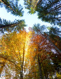 Autumn Leaves and trees with sunbeams - beautiful sesonal  backg Royalty Free Stock Images