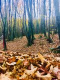 The Autumn of Leaves Royalty Free Stock Image