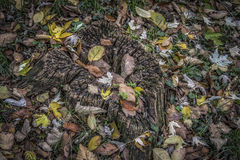 Autumn Leaves. A trunk covered with fallen leaves Royalty Free Stock Image