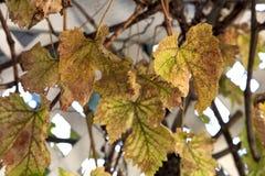 Autumn Leaves Turning Colors para la estación imágenes de archivo libres de regalías