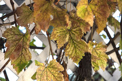 Autumn Leaves Turning Colors para la estación foto de archivo libre de regalías