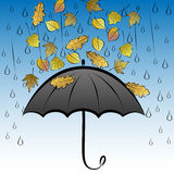 Autumn leaves and umbrella Stock Photography