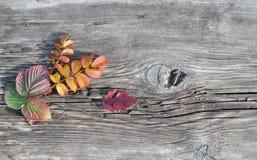 Autumn Leaves und altes Brett Lizenzfreie Stockfotografie