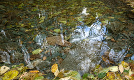 Autumn leaves under clear water surface Stock Images