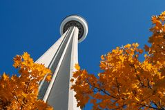 Autumn leaves under the CN Tower, Toronto Royalty Free Stock Photos