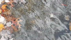 Autumn Leaves Under & Over Lake Surface stock video