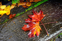Autumn leaves under rain Royalty Free Stock Photography