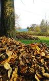 Autumn, leaves under the tree stock photo
