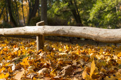 Autumn leaves under a wooden fence Royalty Free Stock Image