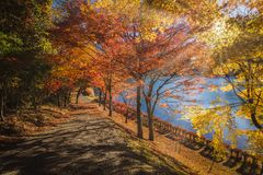 Usui Lake autumn stock image