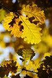 Autumn Leaves variopinto Immagini Stock Libere da Diritti
