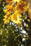 Autumn Leaves variopinto Fotografia Stock