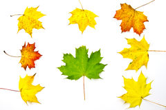 Autumn leaves. Various color of autumn leaves Stock Photos