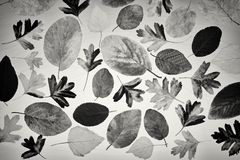 Autumn leaves from various trees on a light background. stock photo
