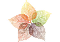 Autumn leaves, vector Stock Image