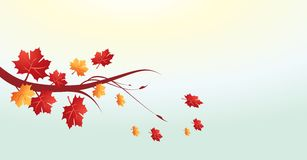 Autumn leaves vector  Royalty Free Stock Photography