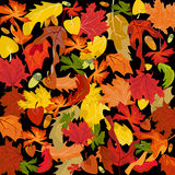Autumn leaves, vector background Stock Image