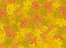 Autumn leaves vector background Royalty Free Stock Images