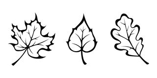 Autumn leaves. Vector black contours. Royalty Free Stock Images