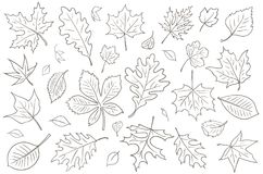 Autumn Leaves Vector Drawing Stock Fotografie