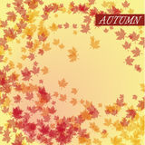 Autumn leaves vector Stock Photo