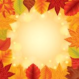 Autumn leaves vector frame Stock Photos