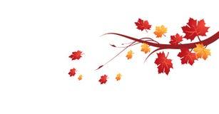 Autumn leaves vector illustration Stock Photography