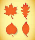 Autumn leaves. Vector illustration. Set Royalty Free Stock Images