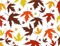 Autumn leaves vector illustration Royalty Free Stock Image