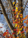 Autumn Leaves at the Vee Stock Image