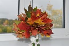 Autumn Leaves Vermelho e amarelo imagens de stock