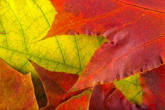 Autumn leaves  very close Stock Images