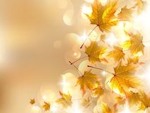 Autumn leaves, very shallow focus. Royalty Free Stock Photo