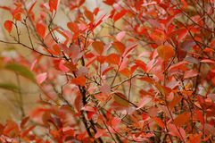 Autumn leaves, very shallow focus stock photography