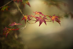 Autumn leaves, very shallow focus. Colorful autumn leaves, very shallow focus royalty free stock images