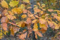 Autumn leaves, very shallow focus stock photos