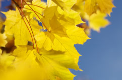 Autumn leaves, very shallow focus. In the day royalty free stock image