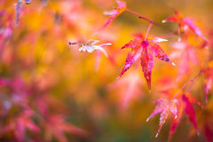 Autumn leaves, very shallow focus stock photo