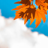 Autumn leaves, very shallow focus Stock Images