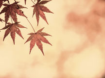 Autumn leaves, very shallow focus. Autumn red leaves, very shallow focus stock photography
