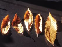 Autumn leaves. View of dried Autumn leaves  in a dark backgroun Stock Photos