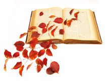 Autumn leaves on vintage book. Red autumn leaves on vintage book royalty free stock photo