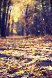 Autumn leaves in vintage park alley forest Royalty Free Stock Image