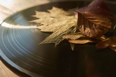Vintage vinyl record and autumn leaves stock image