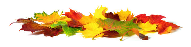 Autumn leaves in vivid colors on white Stock Images