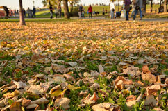 Autumn leaves and walkers Royalty Free Stock Photo