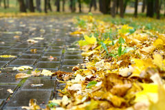 Autumn leaves on walkway Stock Photos